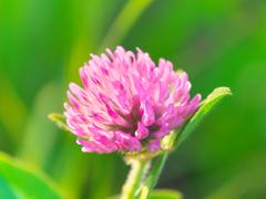 足元の花 Ⅱ