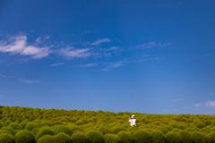 コキアの丘とカメラ女子
