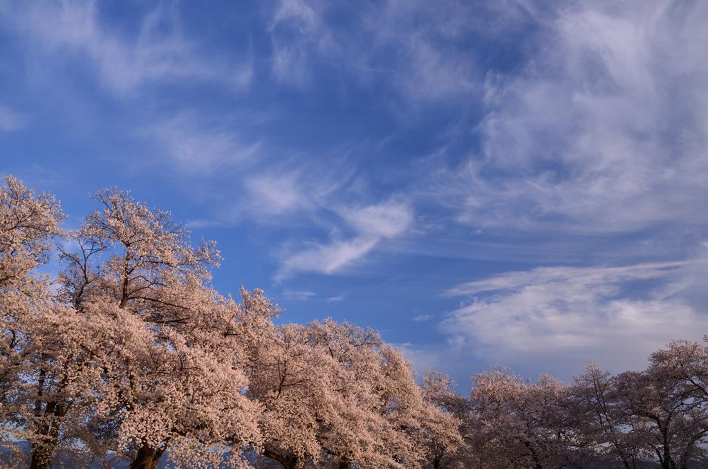 春色夕景①