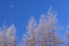 美ヶ原はまだ寒い