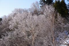 春に咲いた冬の花