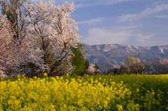 北信濃の春①