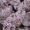 上田城跡の春