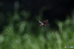 公園のコウモリ
