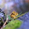 fall of the leaf