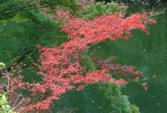 お濠に映える紅葉