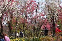 晴天で賑わう天神山ガーデン