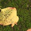 雫が綺麗落ち葉 2