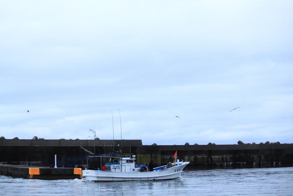 漁船が帰って来たよ~と、ウミネコが騒ぐ漁港