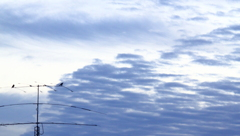 ヤジロべエやってる・・今朝の鳥
