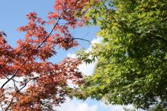 庄川温泉郷の秋の始まり