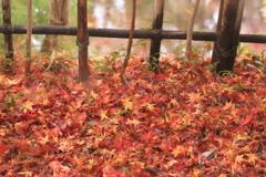 一面が紅色・・もうすぐ冬