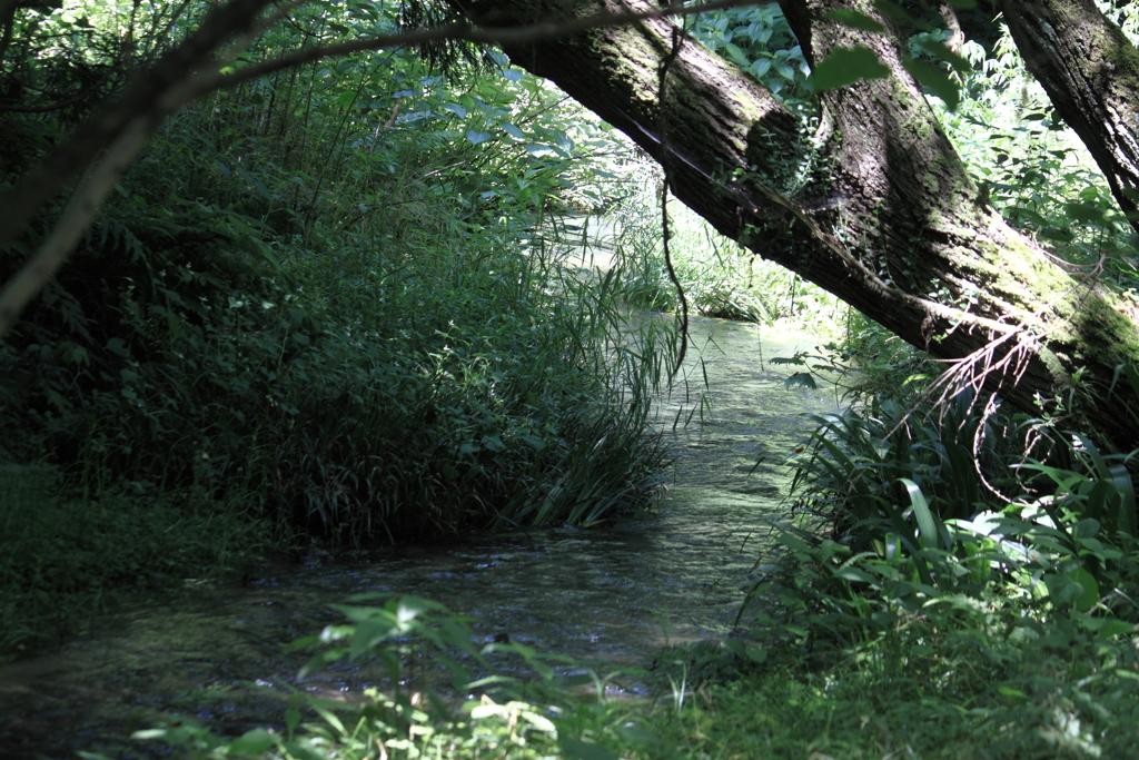 原始の森みたいな公園の一角