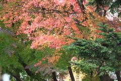彩豊かな紅葉