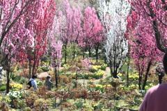 花の森 天神山ガーデン