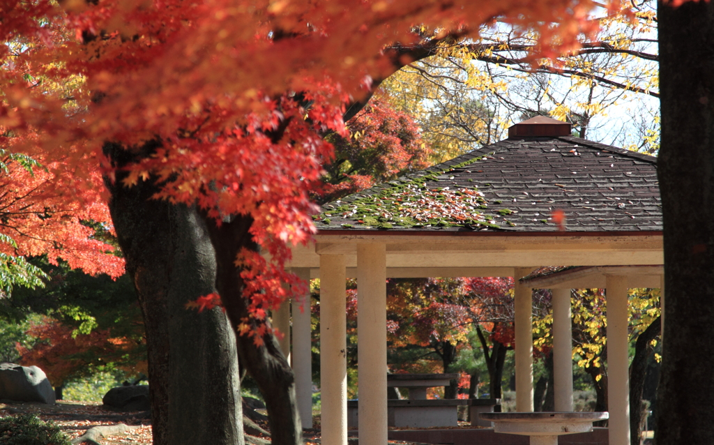 紅葉輝く公園の休憩所