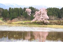 桜咲く風景・・1
