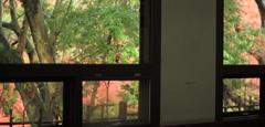 窓越しの晩秋の賑わい