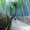 京都竹林散策