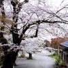 風情ある山・・桜道