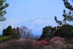 春の山はクッキリ綺麗に見えないけど立山連峰剱岳は見えた方が良い(^'^)