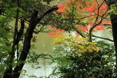 紅葉際立つ濠の傍
