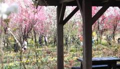 東屋で一休み・・賑わう園内を楽しむ