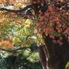 移り変わる紅葉色に気を取られ