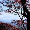 ハラハラと散りゆく紅葉