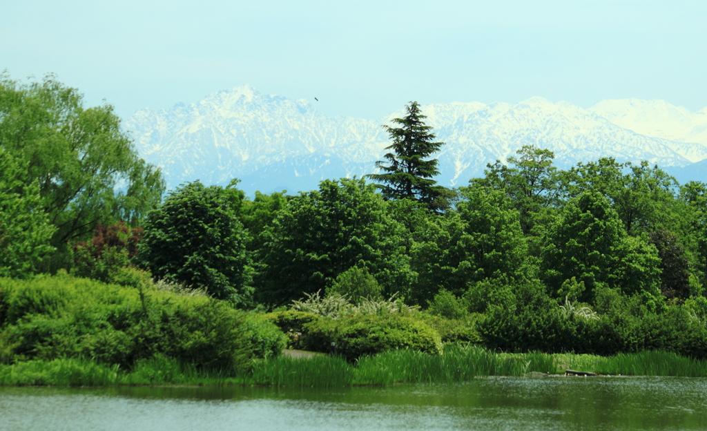 植物園より眺める立山連峰