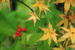 庭の秋全開~^^