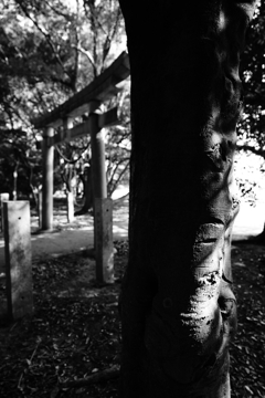 『 鳥居に神聖な感覚を感じるのは日本人だけなのか? 』