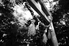 『 鳥居に神聖な感覚を感じるのはほんまに日本人だけ? 』
