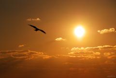 夕陽へ翔ぶ