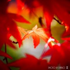 秋なんだなぁ~ <17>