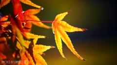 秋なんだなぁ~ <3>