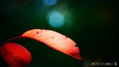 秋な感じ!<11>