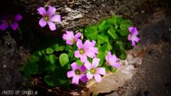 野に咲く花 <2>