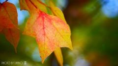 それぞれの秋 <5>