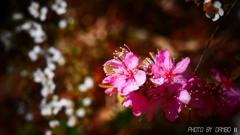 喜びの花 <2>