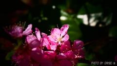 喜びの花 <1>