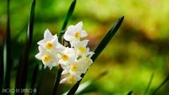 春の香りを届けます <23>