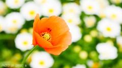 素敵な花言葉 <3>