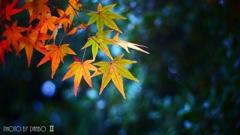 秋なんだなぁ~ <19>