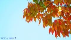 秋な感じ!<9>