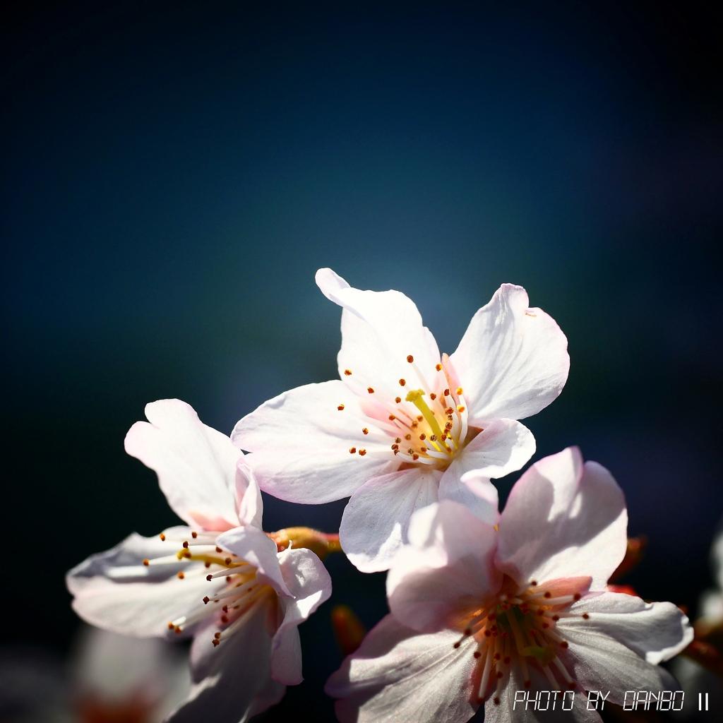 春よ、来い <2>