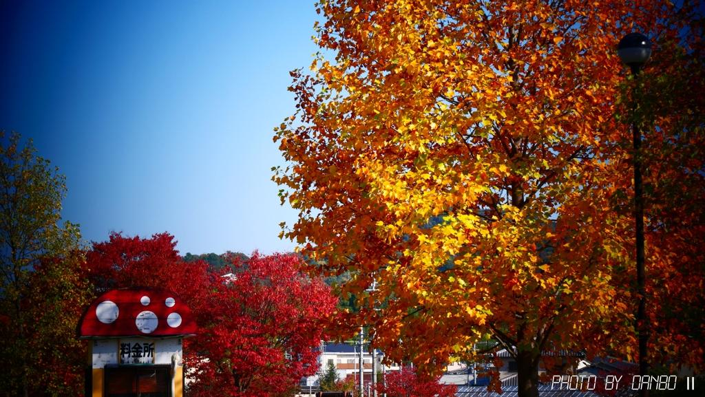 秋の料金所 <1>