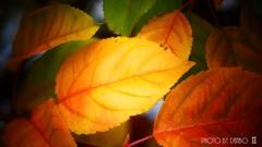 それぞれの秋 <2>