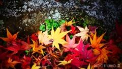 秋なんだなぁ~ <27>