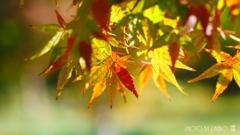 秋なんだなぁ~ <1>